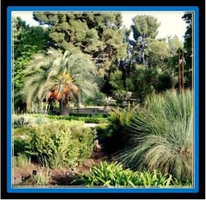 10. Botanico